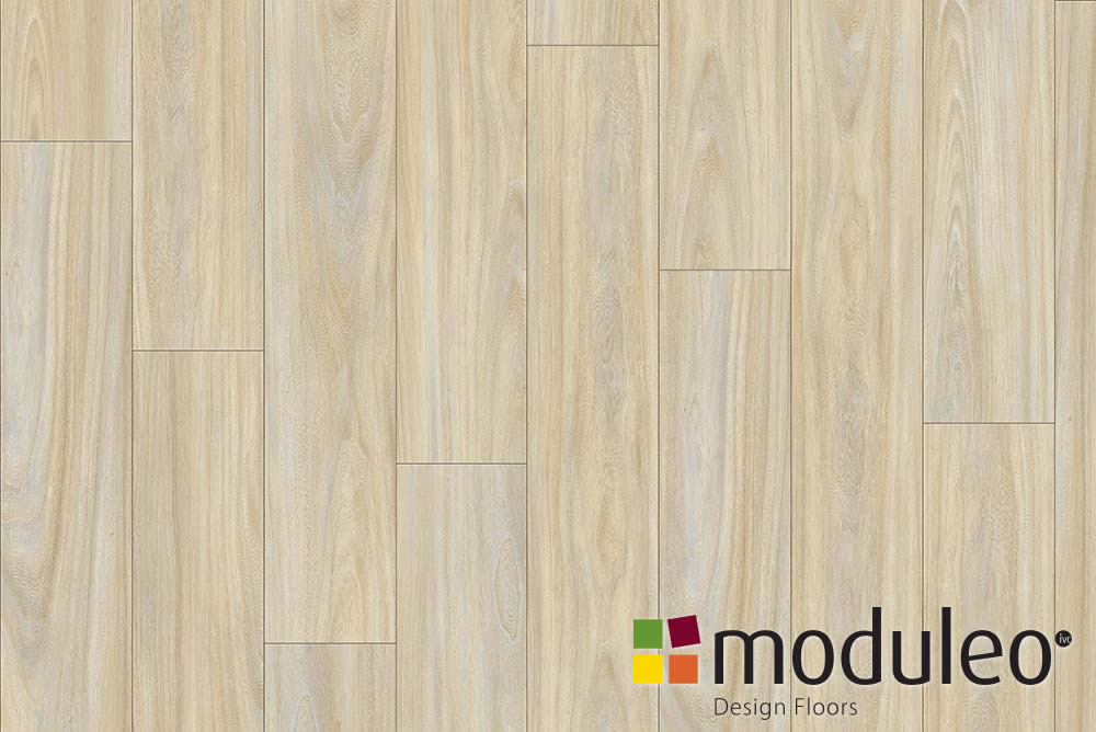 Baltic Maple